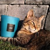 Leháro s French Riviéra kolekce Selection #cat #kocka #aromanaturals #jaro #kveten #relax #darek #svicka #svicky #sojovasvicka #sojovesvicky #selection #interier #domov #modra #vune #more #french #riviera #vyber #kolekce #trava #aroma #aromanatural #vonnyvosk